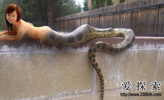 难以置信!蛇王竟捕捉到人头蛇身怪物(3)