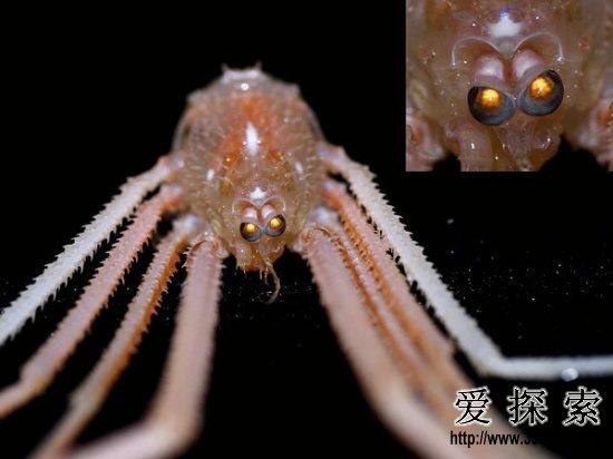 海底外星人?深海现罕见发光神秘生物