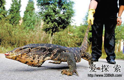 宠物界六大最恐怖的动物 你敢养么?(4)