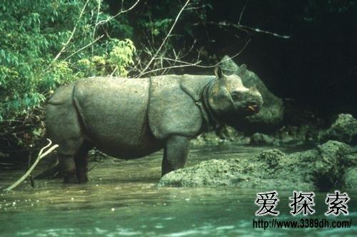世界十大濒危动物