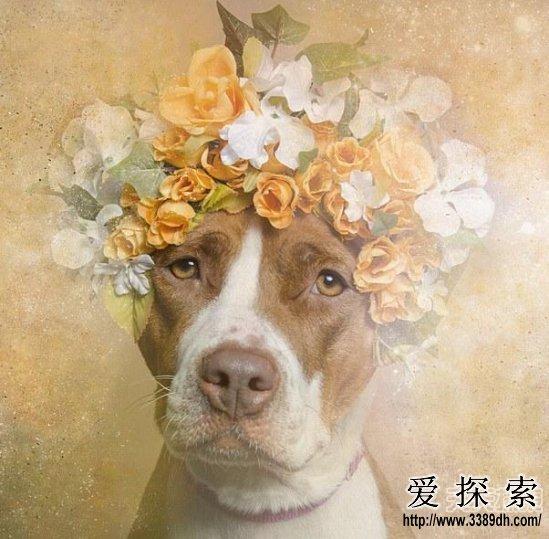 动物带花环头像