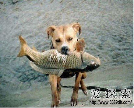 埋着脑袋的动物照片