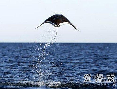 世界十大离奇飞行动物:天空飞翔的鱼