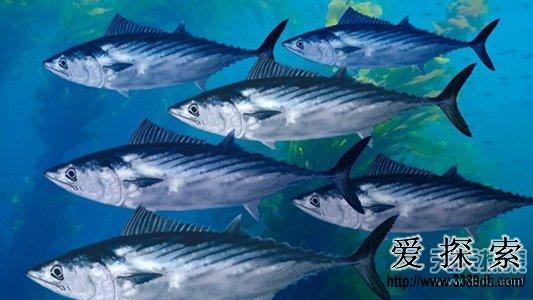 动物世界里,不管是捕食者还是被捕食者,暗袭和速度是它们赖以生存的两大法宝。许多陆地和海洋生物正是通过这两项技能得以繁衍成长,维持在自然界中的生存地位。对于暗袭,大多数动物拥有独特的保护色和逃遁技巧,以此捕食或躲避天敌。然而,在海洋世界,失去遮蔽物和光线,速度才是生存王道。下面小编就带大家来看看海洋里速度最快的10种生物。   10.