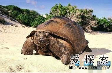 世界寿命最长的动物 原来最长寿命竟是他