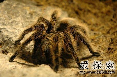 自然界最丑动物盘点 简直让人不能直视(2)