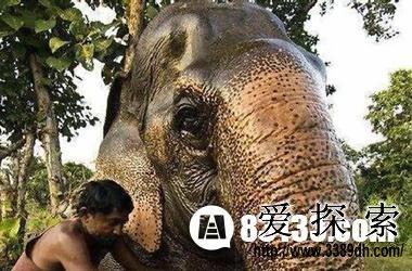 世界十大寿命最长的动物排行榜